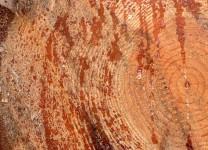 wood-1139464_640