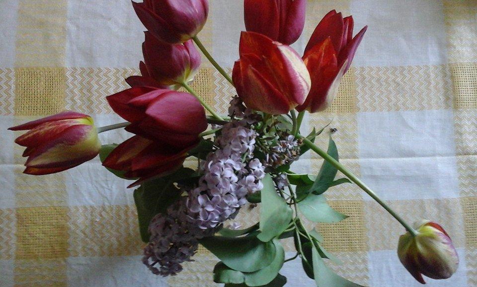 2.tulip_n